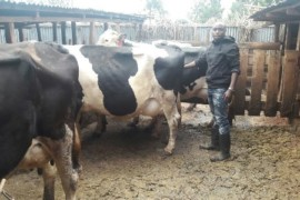 Biko Kithinji Green Dairy farm 1