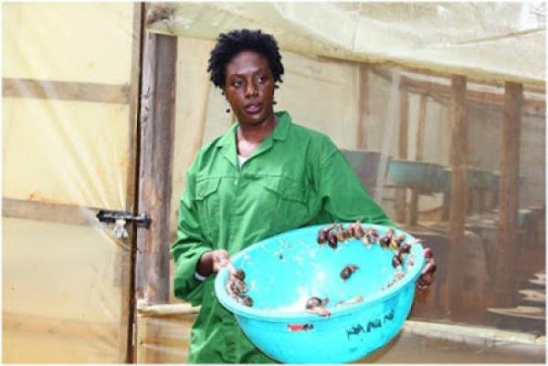 Image result for Rosemary Odinga
