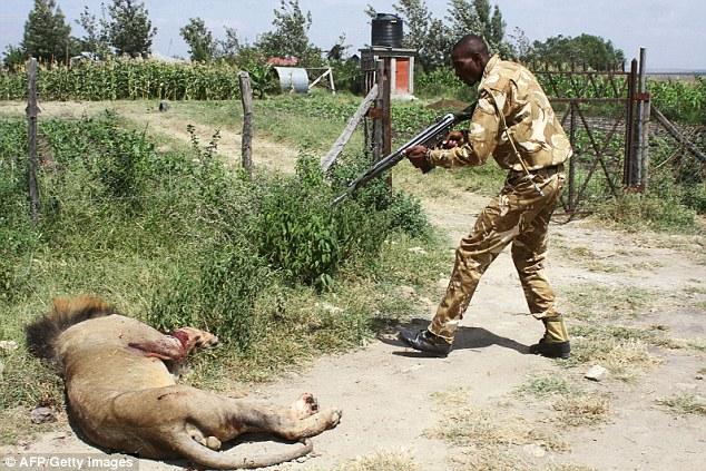 Lions eat man in Ongata Rongai - Business Today Kenya
