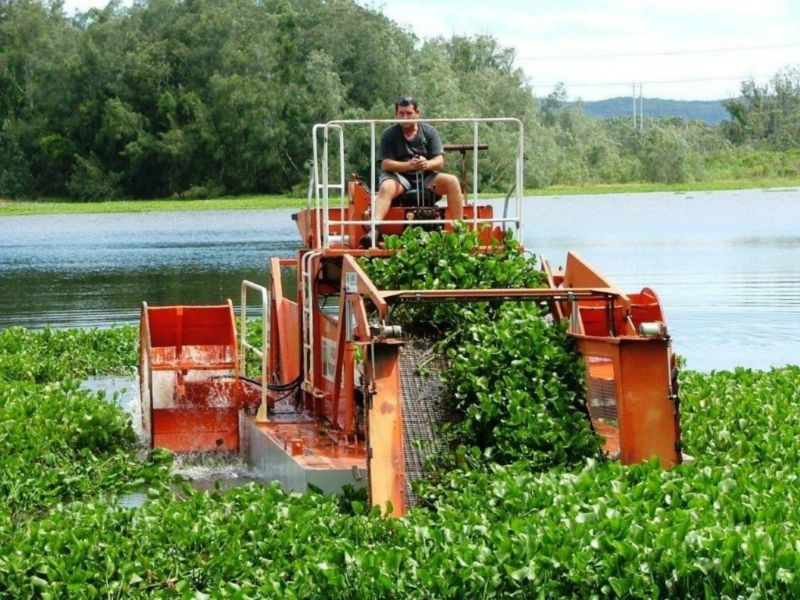 Hyacinth-factory-in-kisumu Kisumu to get factory that will turn water hyacinth into 'gold'