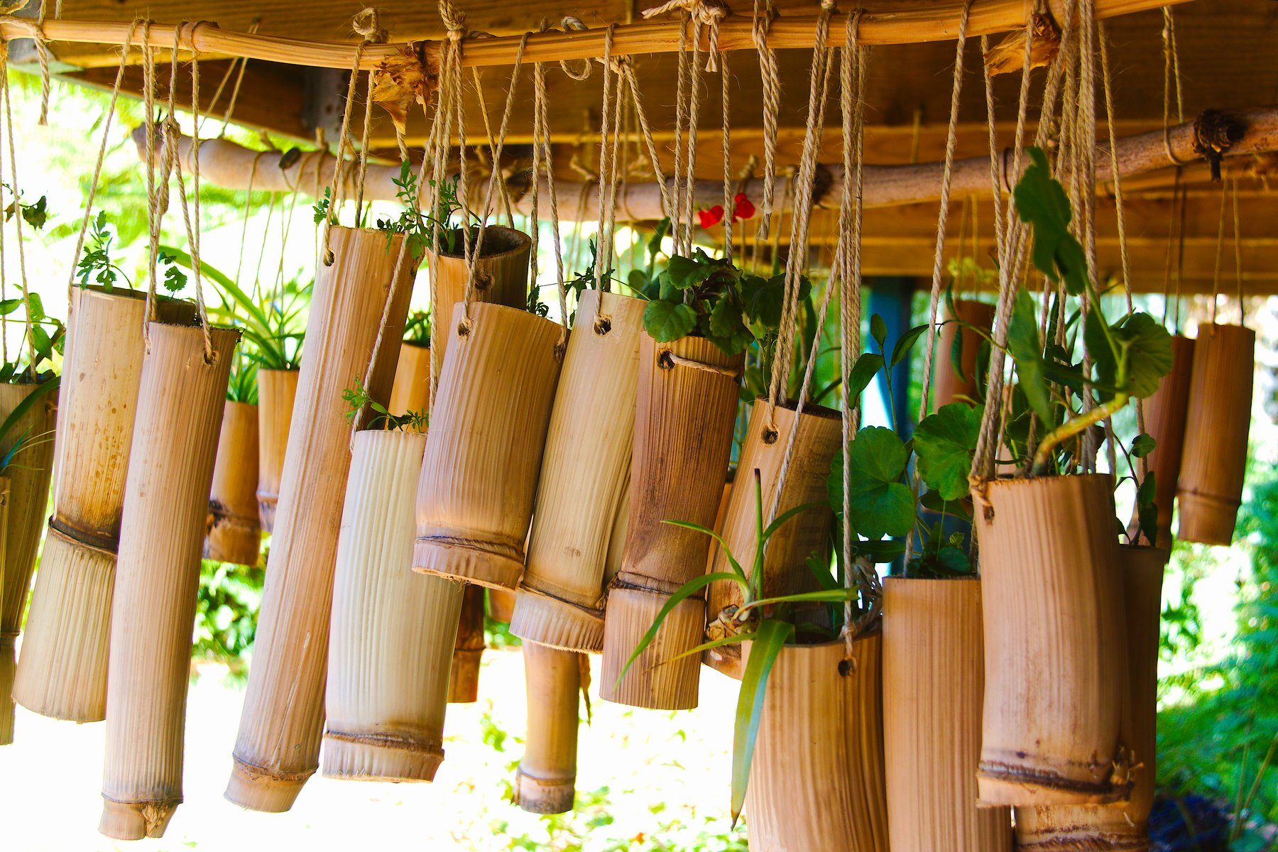 bamboo farming the seven things you need to know
