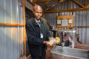 Soya-beans-processing-300x199 Embu soya beans farmers cut off middlemen to reap big returns