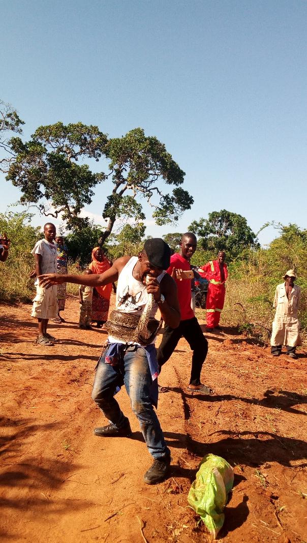 Mwachambuli-Haji-kisses-python Kwale snake chammer subdues a python with a kiss