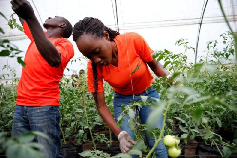 Agribusiness quietly wins heart of Kenya's young job seekers
