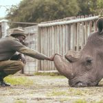 Ol Pejeta Conservancy ranger James Mwenda bonding with Sudan. The movie is about Sudan, the last male white rhino on the planet. www.businesstoday.co.ke