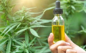 Cannabis oil extract also contains sterols, which are medically used in lowering cholesterol.