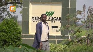 KCB Bank said decision to put Mumias Sugar under receivership to protect its assets and maintain operations. www.businesstoday.co.ke