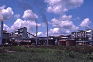 Mumias Sugar Shares www.businesstoday.co.ke