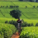 A tea firm. Farmers are abandoning cash crop farming in Kenya and adopting other alternatives. www.businesstoday.co.ke