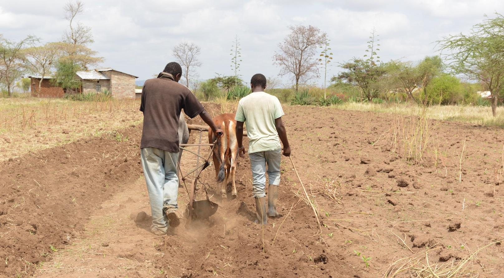 Kenyan farmers and love making www.businesstoday.co.ke