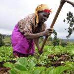 Food security in Kenya