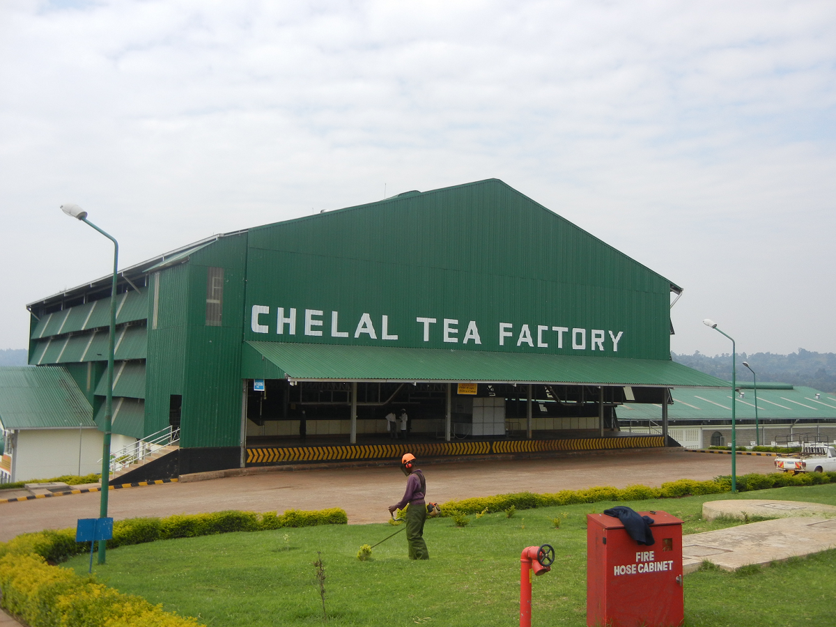 Tea factories in Kenya - Business Today