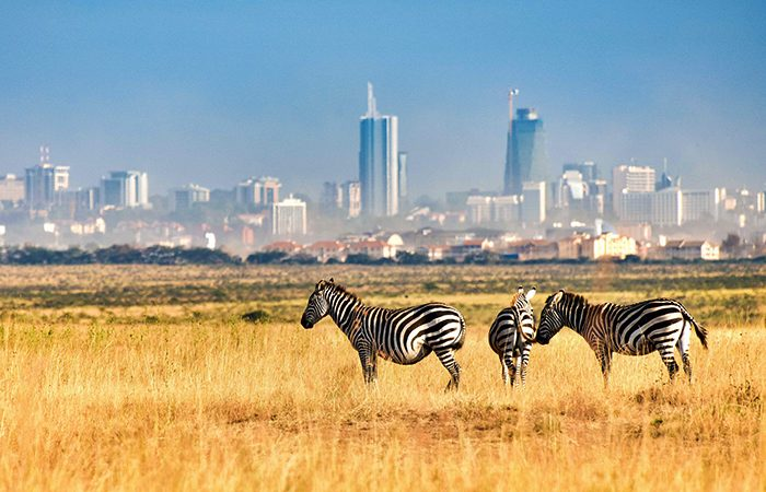Zebras pictured at the Nairobi National Park