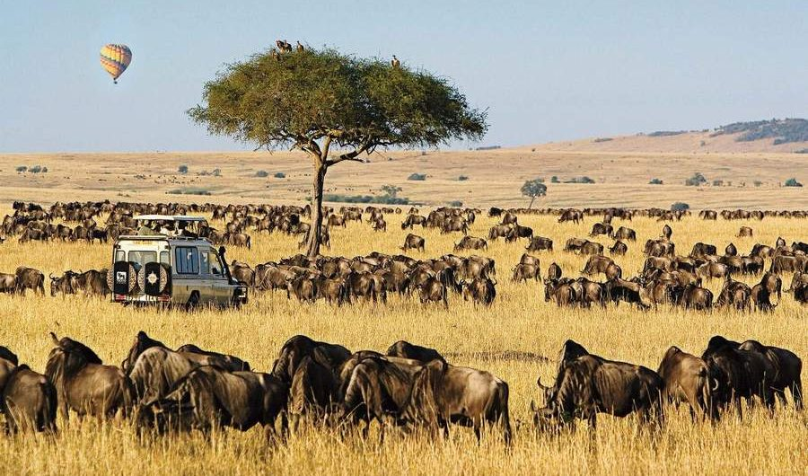 Wildebeests at the Maasai Mara Game Reserve in Narok County
