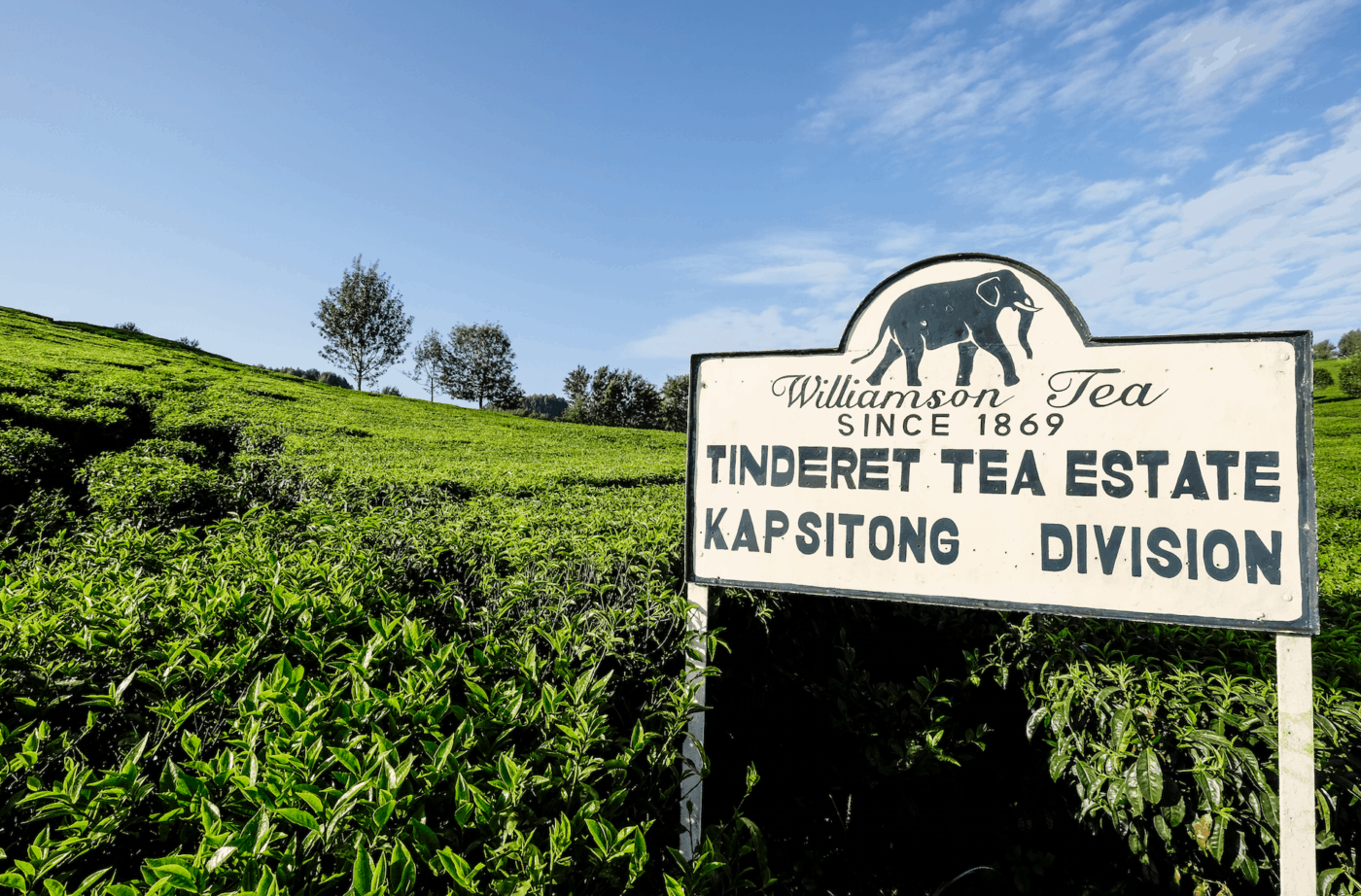A sign at Williamson Tea's Tinderet Tea Farm