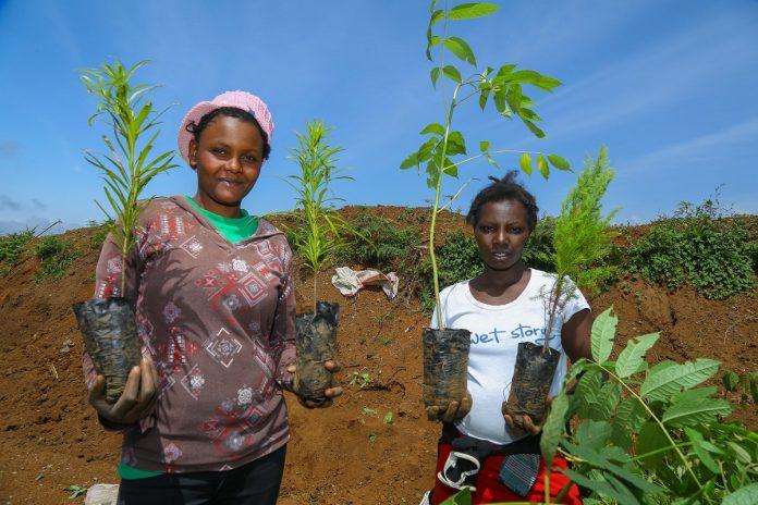 Safaricom plants trees