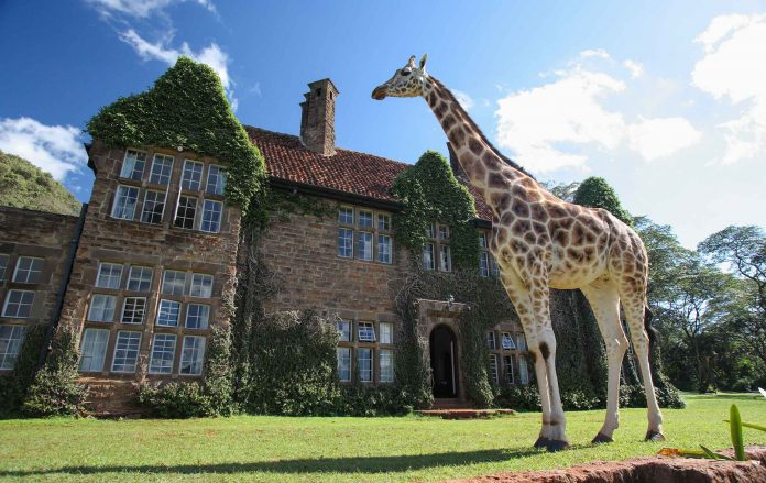 A giraffe outside Giraffe Manor in Nairobi. It has become a staple on many of the world's biggest luxury and travel pages - proving a hit with global influencers and social media stars. [Photo/ Micato Safaris]