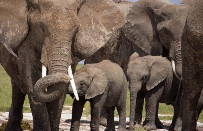 Elephant naming in kenya 1